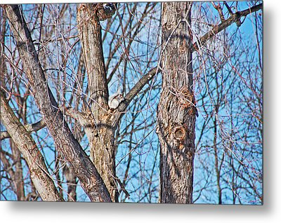 Sunning In The Tree Metal Print by Aimee L Maher Photography and Art Visit ALMGallerydotcom