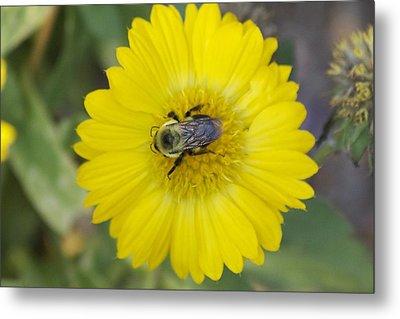 Sunny Bumblebee Metal Print
