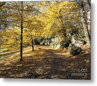Sunny Day In The Autumn Park Metal Print by Michal Boubin