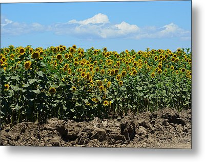 Sunny Day Metal Print by Melissa  Maderos
