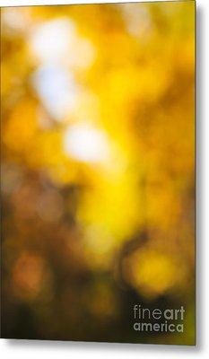 Sunny Fall Forest Metal Print by Elena Elisseeva