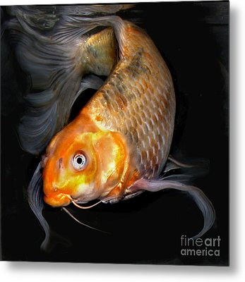 Sunny Koi A Metal Print by Janna Morrison