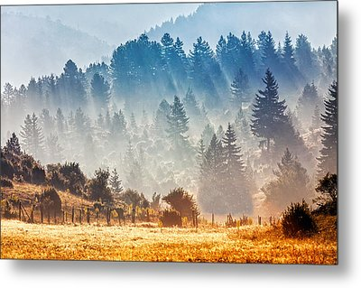 Sunny Morning Metal Print by Evgeni Dinev