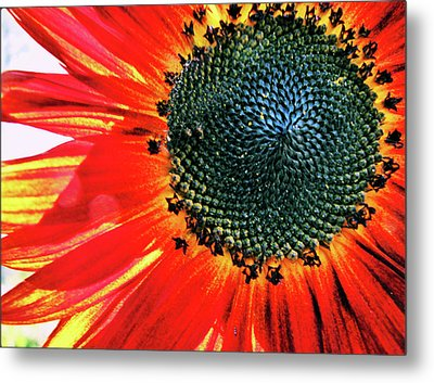 Sunny One Metal Print
