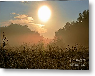 Sunny Side Up Metal Print by Sue Stefanowicz
