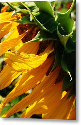 Sunny Times Metal Print by Bruce Bley