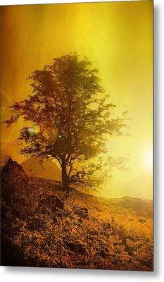 Sunrise Flare Metal Print by Svetlana Sewell