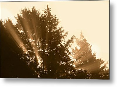 Sunrise In Sepia Metal Print