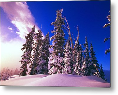 Sunrise Over Snow-covered Pine Trees Metal Print by Natural Selection Craig Tuttle