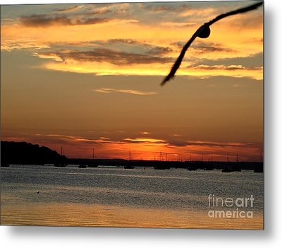 Metal Print featuring the photograph Coming Home by Katy Mei