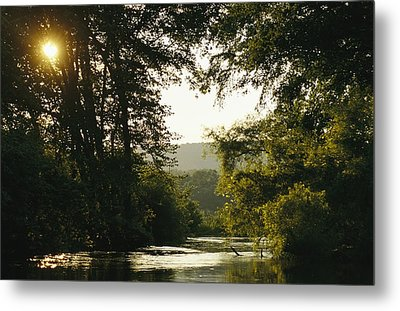 Sunset Above A Riparian Forest Metal Print by Raymond Gehman