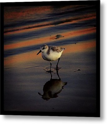 Sunset And Bird Reflection Metal Print