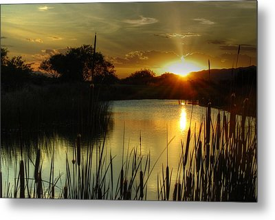 Sunset And Cattails Metal Print by Tam Ryan