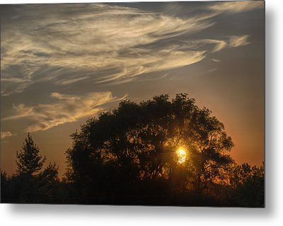 Sunset At The Oasis Metal Print by Joan Carroll