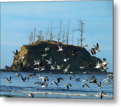 Sunset Bay Scape And Gulls Metal Print by Cindy Wright