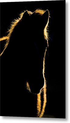 Sunset Horse Silhouette Canada Metal Print by Mark Duffy