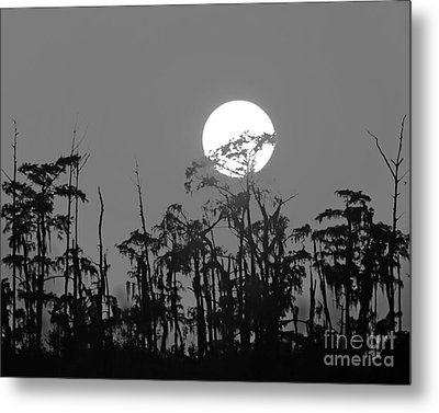 Metal Print featuring the photograph Sunset In Swamp by Luana K Perez