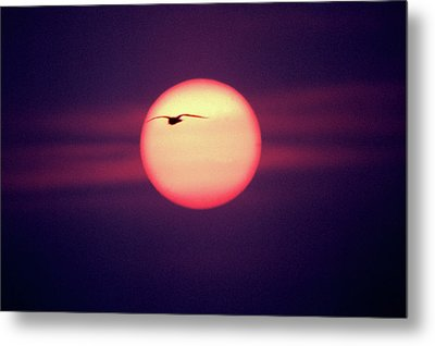 Sunset Metal Print by John Foxx