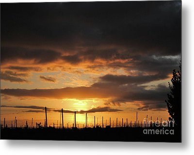 Sunset On The Vineyards Metal Print
