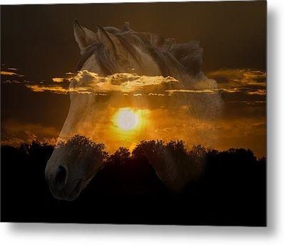Sunset Silhouette Metal Print by Lisa Moore