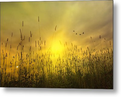 Sunsets To Remember Metal Print by Tom York Images