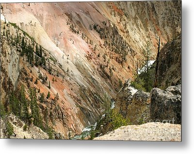 Sunshine On Grand Canyon In Yellowstone Metal Print by Living Color Photography Lorraine Lynch