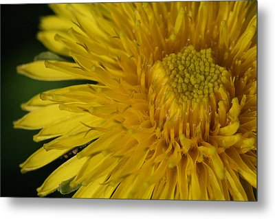 Sunshine Weed Metal Print by Peg Toliver