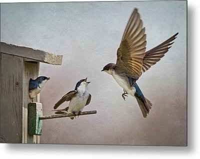 Swallows At Birdhouse Metal Print by Betty Wiley
