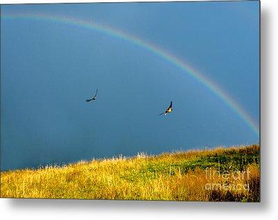 Swallows Under A Rainbow Metal Print by Thomas R Fletcher