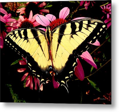 Metal Print featuring the photograph Swallowtail Butterfly On A Purple Coneflower by George Bostian