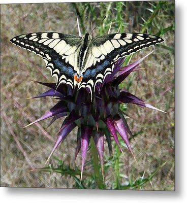 Swallowtail Metal Print by Eric Kempson