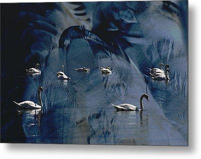 Swan Feather Metal Print by Michael Mogensen