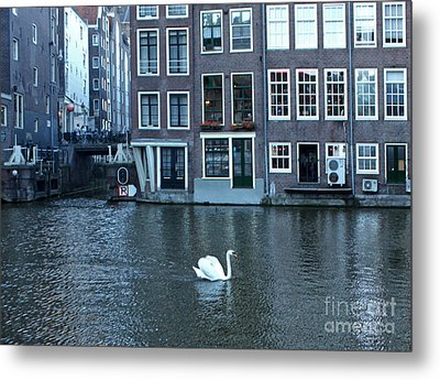 Swan In Amsterdam Metal Print by Gregory Dyer