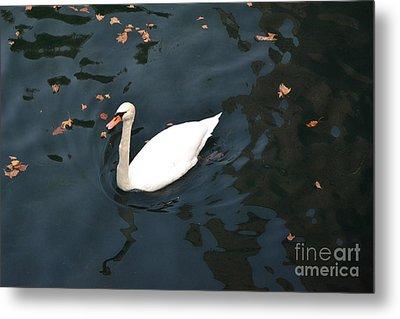 Swan In Autumn Metal Print
