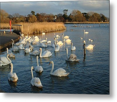 Metal Print featuring the photograph Swan Lake by Katy Mei