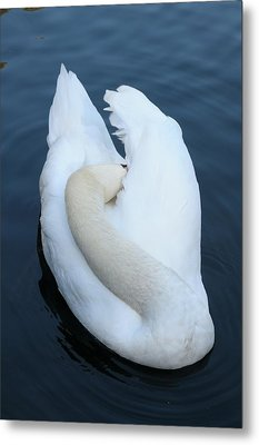 Swan Metal Print by Luis Esteves