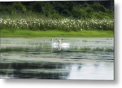Swan Pond Metal Print by Bill Cannon