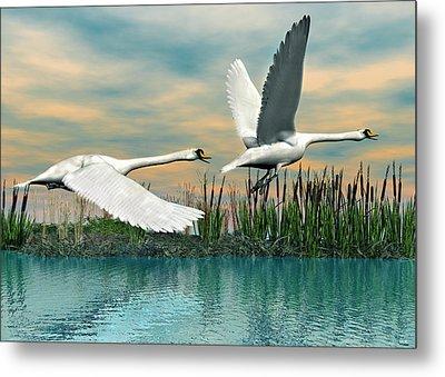 Swans In Flight Metal Print by Walter Colvin