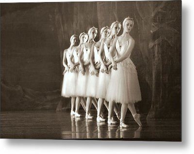 Swans Lined Up Metal Print by Kenneth Mucke