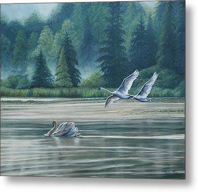 Swans On Carter Lake Metal Print
