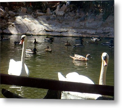 Swans On The Lake Metal Print by De Beall