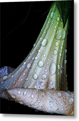 Sweet And Rainy Metal Print by Chris Berry