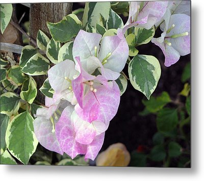 Metal Print featuring the photograph Sweet Bougy by Debi Singer