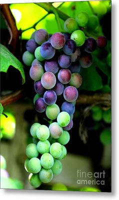 Sweet Grapes Metal Print by Carol Groenen