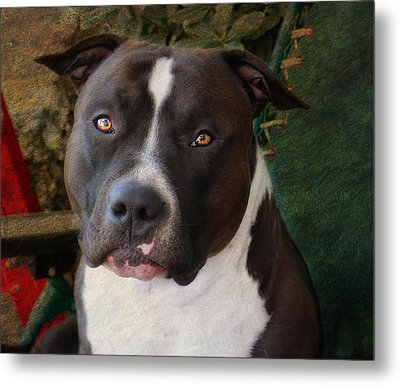 Sweet Little Pitty Metal Print