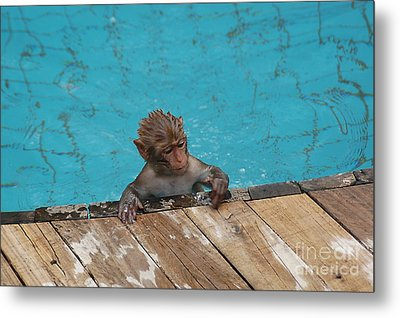 Swim Boy Metal Print