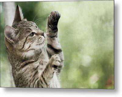 Tabby Kitten Metal Print by Jill Ferry