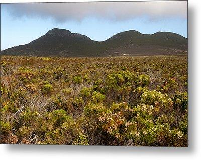 Table Mountain National Park Metal Print by Fabrizio Troiani