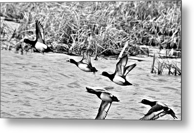 Take Flight No. 2 In Black And White Metal Print by Janice Adomeit