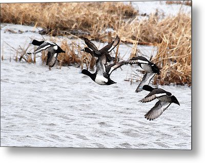 Metal Print featuring the photograph Take Flight No. 3 - Watercolor by Janice Adomeit